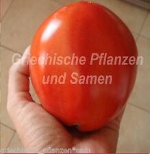 Kornesesijr Ukrainian Tomate * Riesen-Tomaten * 10Samen
