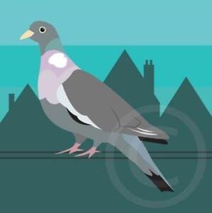 Pigeon Bird Artwork Card Coaster Mug Placemat Mousemat Badge Gifts