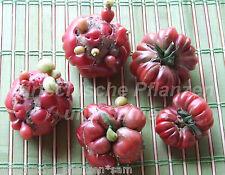 Cherokee purple Tomate 10 frische Samen alte Tomaten Sorte der Indianer