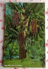 Vintage Unused Postcard Wine Palms, Hawaiian Islands, Honolulu. T.H. ~ Hawaii