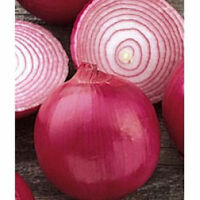 onion, RED GRANO, early sweet variety, 310 seeds! GroCo