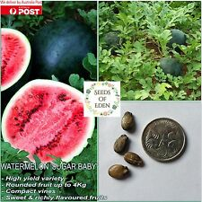 "10 WATERMELON ""SUGAR BABY"" SEEDS(Citrullus lanatus); High yield variety"