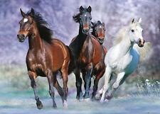 RIESEN Poster PFERDE - Running Horses By Bob Langrish  ca140x100 NEU FL546