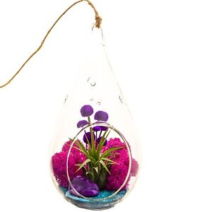 """Air Plant Terrarium with Purple Agate / 7"""" Teardrop Glass / Turquoise Passion"""
