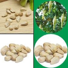 10Pcs Gaint Female Ginseng Eggplant Pepino Seeds Easy Plant Bonsai Fruit Tree
