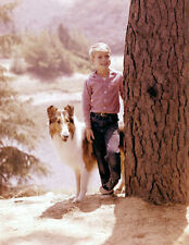 JON PROVOST UNSIGNED PHOTO - 5805 - LASSIE
