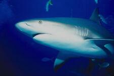 787047 cerca de tiburón Natación por camarógrafo aletas hasta A4 Foto Impresión