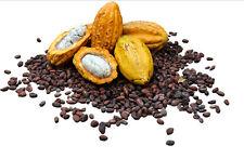 5 Cocoa Seeds,Cacao Seeds, Chocolate Nut Tree Theobroma cacao L.Free Ship
