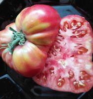 Tomate 'japanische Trüffeltomate, rot' , 10 Samen