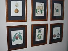 Six framed antique stone carved lithographs, hand tinted NY state fruit
