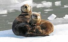 Le immagini STOCK 26gb foto JPEG 6 DVD ricette ANIMALI Business GUIDE storia dell'arte