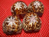 Tiger Star-Embossed Coral Seashell Napkin Rings Set (4) Beach Theme Decor   258