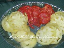 """White Queens Heirloom """"Fancy White"""" Tomato Listed in 1882 by A.W. Livingston"""