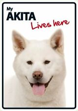 Akita Lives Here A5 Plastic Sign