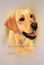 Yellow Labrador Retriever Print by Robert May