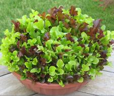 1g (500pcs) mixed Leaf Lettuce seeds Leaf Salad Organic Green Vegetable