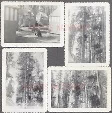 Lot of 4 Vintage Snapshot Photos Unusual Wild Black Bears Climbing Tree 692483