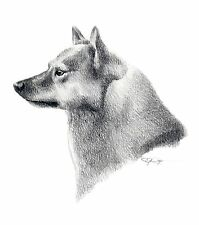 Finnish Spitz 2 Pencil Drawing Dog 8 x 10 Art Print signed Djr
