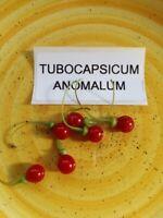 Tubocapsicum anomalum - Japanische Wild Paprika 5+ Samen Saatgut Seeds RARITäT!