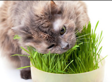 500 PCS Mixed Organic Grass Seeds For Cat Green Digestive Crystal Catnip Grass