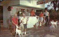 Tommy Bartlett's Deer Ranch Silver Springs FL Bottle Feed the Animals Postcard
