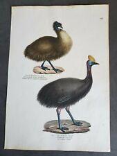 1830 Emu -  K Brodtmann Hand Colored Original Folio Stone Lithograph