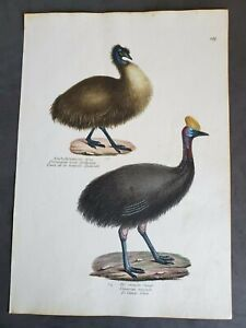 1830 Emu -  K Brodtmann Hand Colored Original Folio Stone Lithograph