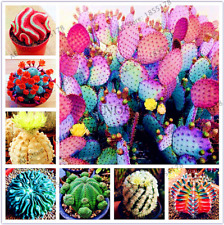 200 PCS Seeds Mixed Cactus Bonsai Ornamental Plants For Home And Garden NEW 2020