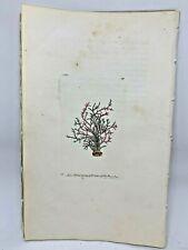Common Coralline - 1783 RARE SHAW & NODDER Hand Colored Copper Engraving