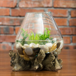 MyGift Decorative Natural Driftwood and Clear Molten Glass Bowl Plant Terrarium