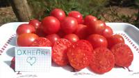 20 graines de tomate Coeur de Boeuf Oxheart BIO semences paysannes Pascal Poot