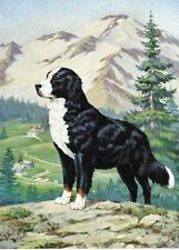 Bernese Mountain Dog - Vintage Color Print - Matted