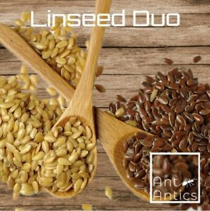 Linseed Duo - Ant Antics - Harvester Ant Seed - 100mm