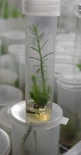 Plant Tissue Culture Media Rooting IBA NAA  Microclone Clone Cloning TC 215 420