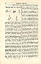 Entomologie description de la mouche insecte par un entomologiste GRAVURE 1846