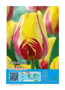 """@//(◕‿◕)\@ Tulpen Blumenzwiebeln : Tulpe  """"  Twister """""""