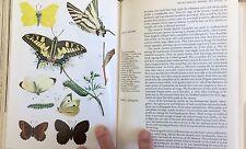 Grzimek's ENCYCLOPEDIA Bugs/INSECTS/Butterflies & MANY MORE 1975 GREAT BOOK L@@K