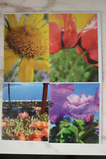 4 Floral Nature Photo Greeting Cards Blank Cards Great Gift