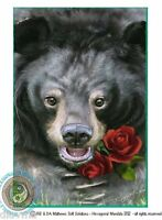 © ART - black Asiatic Sun moon BEAR wildlife nature Original Artist Print by Di