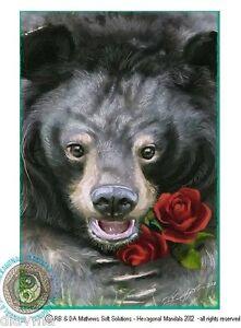 © ART - black Asiatic Sun moon BEAR wildlife nature Original Artist Print by Di