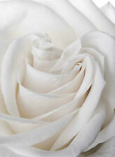 STUNNING ABSTRACT WHITE FLOWER #735 QUALITY FRAMED CANVAS PICTURE WALL ART A1