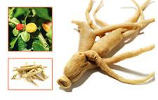 6 Seeds, Chinese Ginseng Ashwaganda, Herbs New Fresh Plants, Healthy Gardening