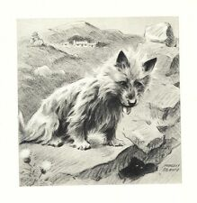 Cairn Terrier - Morgan Dennis Dog Print - Matted