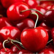 20Pcs Red Cherry Seeds Organic Seed Fruit Seeds Bonsai Tree Home Garden Plants