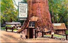 World Famous Tree House Redwood Highway California Linen Postcard
