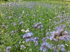 Bienenweide Nektar&Pollen Blumenmischung Blumenwiese 2kg(reicht bis zu 2000 m²)