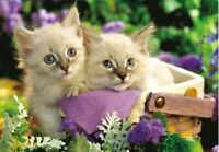 300 Pieces DIY Jigsaw Cute Kitty Cat Animals for Adults Kids Puzzle Toys Gifts