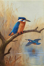 Nice Oil painting beautiful birds Kingfisher on branch the other one flying 36""