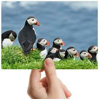 "Puffins Mykines Faroe Islands Small Photograph 6""x4"" Art Print Photo Gift #16953"