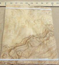 "Olive Ash Burl wood veneer 8"" x 8"" with no backing (raw veneer) ""A"" grade 1/42"""